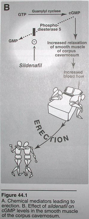 funny viagra mechanism illustration